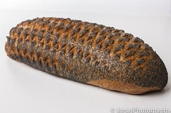 Volkorenbrood vloer maanzaad